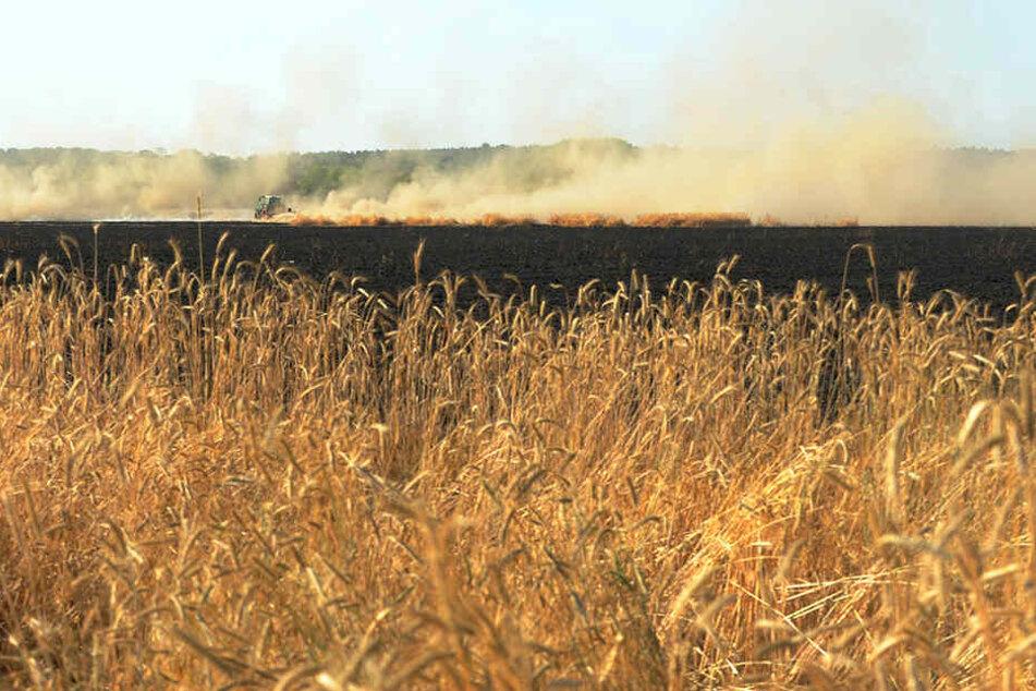 Flammen rasen nach Feldbrand in der Oberlausitz auch auf Waldstück zu