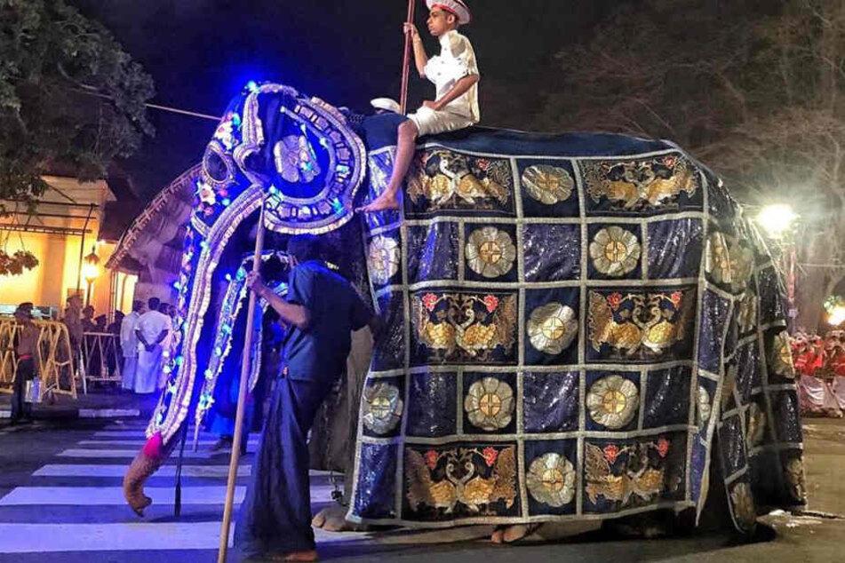 So prunkvoll und schön die Elefanten auch verkleidet sind, die nackte Realität sieht anders aus.