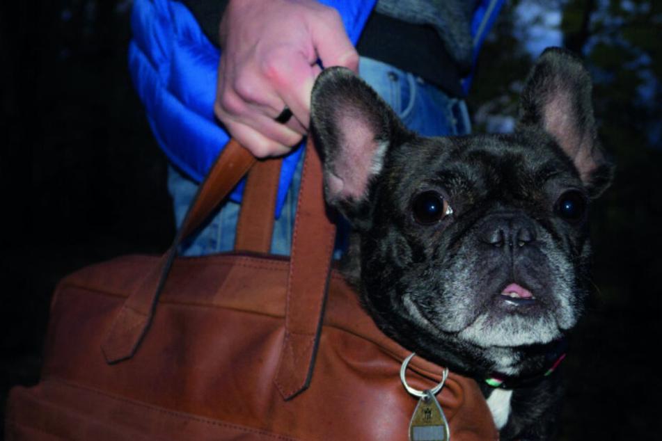 Bulldogge Lucky passt auf, dass nichts geklaut wird.