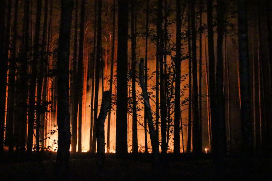 In der Annaburger Heide ist ein Waldbrand ausgebrochen (Symbolbild).