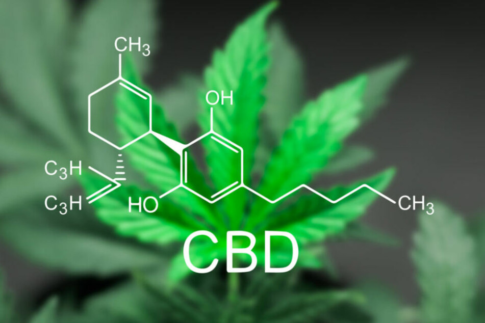 CBD-Öl wird aus der Marihuana-Pflanze gewonnen.
