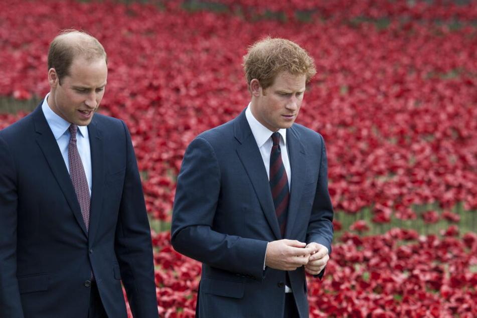 Prinz Harry (links) und sein Bruder William (rechts)