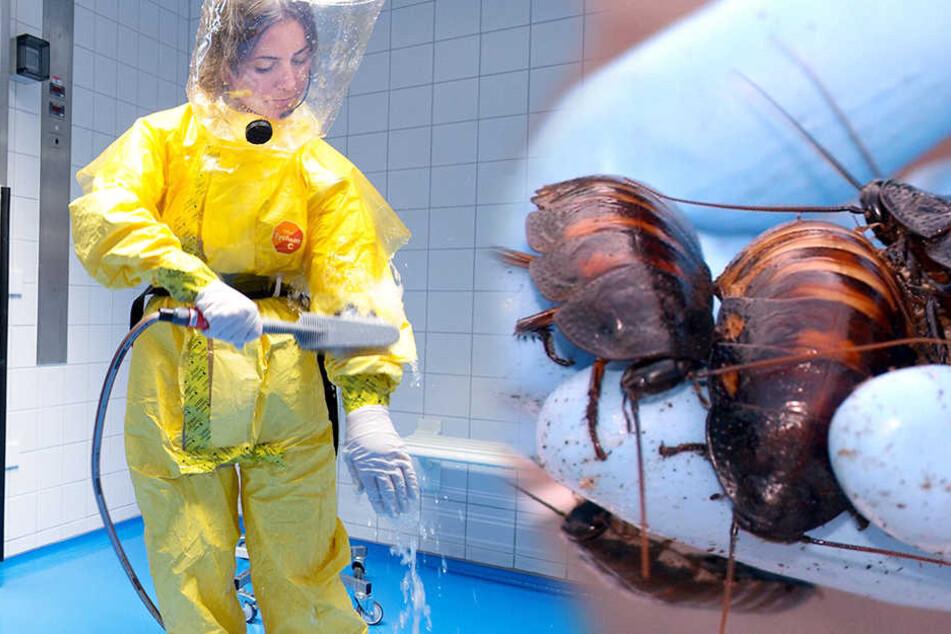 Die Wohnung und auch die Kleidung der Familie waren kontaminiert mit Kakerlaken und deren Eiern.