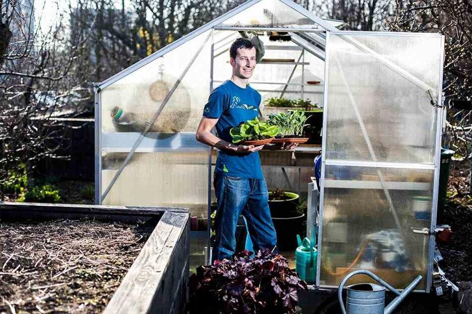 Jörg Fischer (34) mit Salat- und Kohlrabipflanzen fürs Gewächshaus. Tipp: Der Stadtverband der Kleingärtner präsentiert sich kommende Woche auf der Ostermesse mit einer Erlebniswelt.