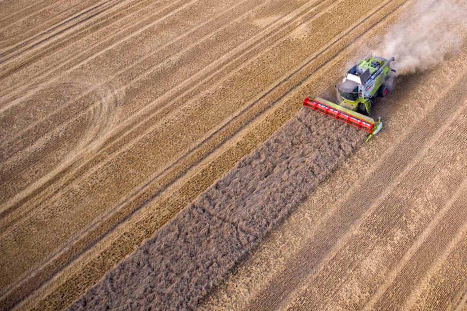 3,2 Milliarden durch Brexit in Gefahr? Bauernverband fordert eigenes Handelsabkommen