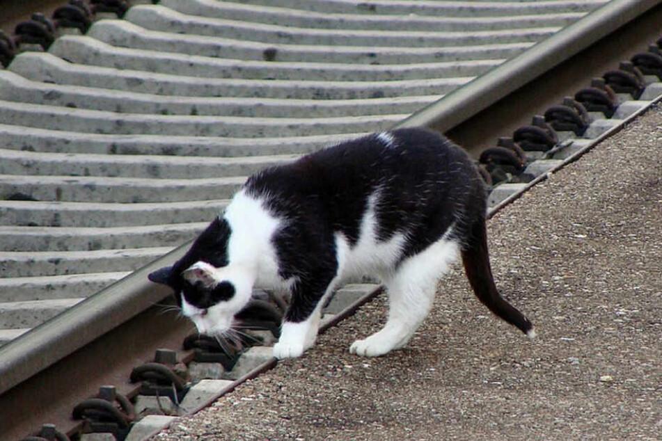 Eine Katze löste in Niederbayern einen Polizeieinsatz aus, weil sie in einen Zug einstieg.