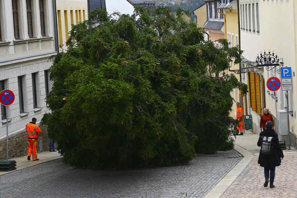 Achtung, hier kommt ein Weihnachtsbaum