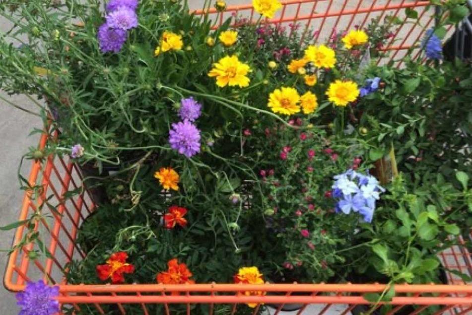 Gartencenter in Köln: Die besten Anlaufstellen für den Frühling