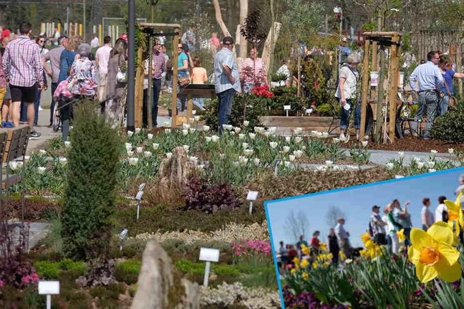 Ansturm zu Eröffnung: Fast 2000 Besucher bei Landesgartenschau