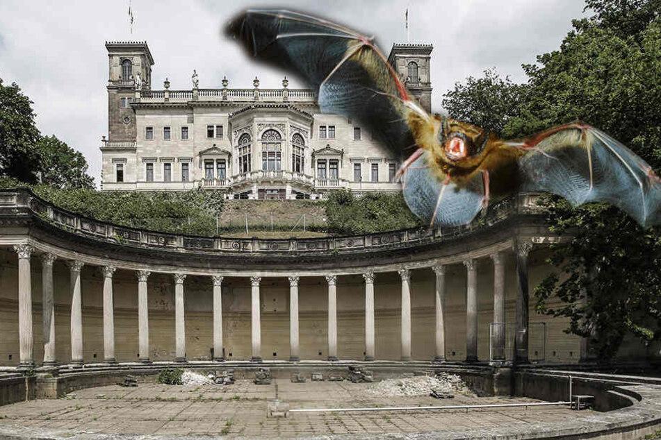 Schloss Albrechtsberg: Stoppen Fledermäuse die Bad-Sanierung?