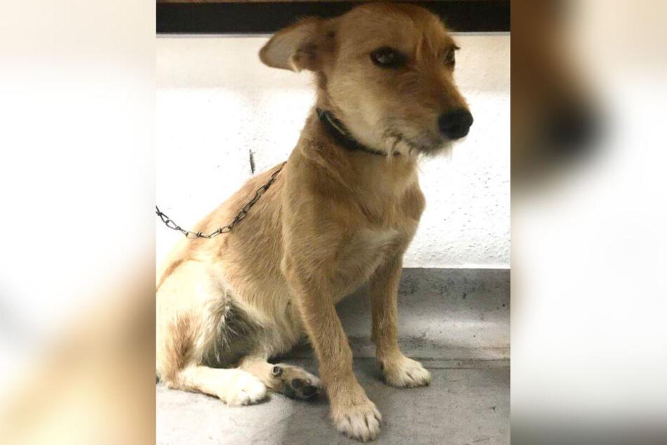 Dieser süße Hund wurde am Mittwochmorgen abgegeben. Wo ist sein Herrchen?