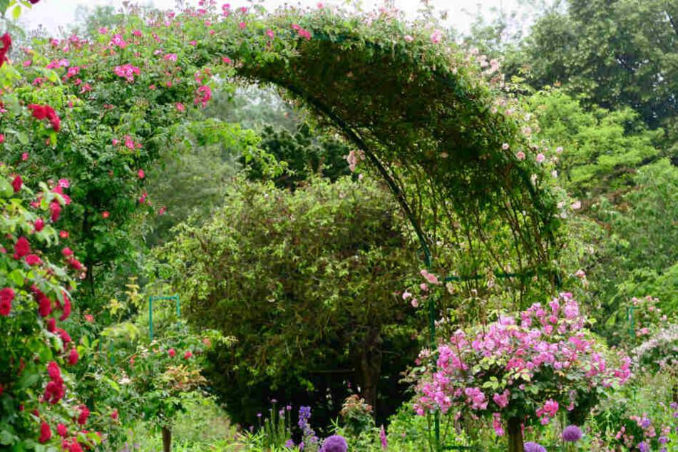 Völliger Kontrast zum Schotter-Beet: ein blühender Garten.