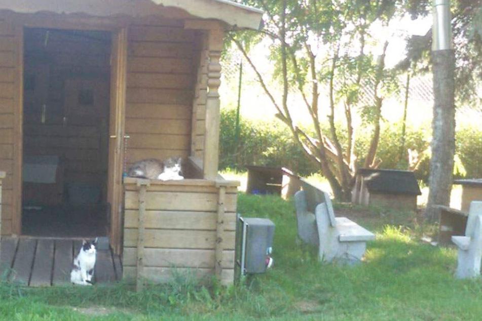 """Im Außenbereich gibt es extra für diejenigen Katzen ein Gehege, die menschenscheu sind. """"Ab und zu werden welche zutraulich und wir können sie mit ins Gebäude zu uns nehmen."""""""