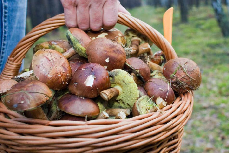 Ein Pilzsammler fand vier Granaten in einem Wald in der Nähe von Dieburg.