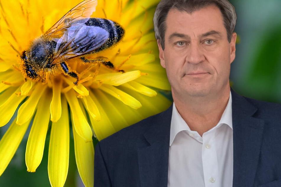 Ärger wegen Artenschutz-Gesetzespaket: Kritik an Söder und Koalition