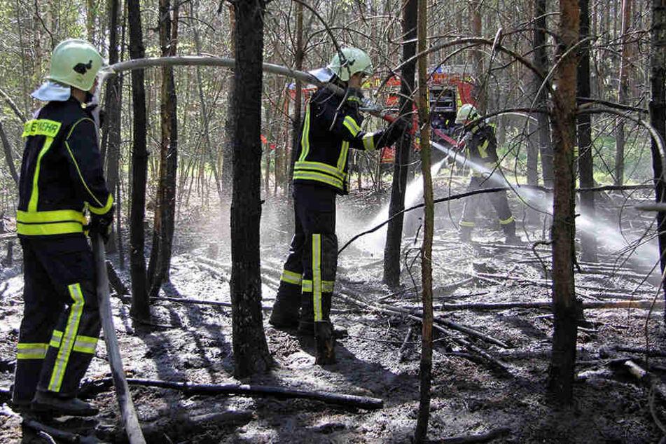 Die Feuerwehr musste in den vergangenen Tagen fünf Waldbrände um Weinböhla  löschen.