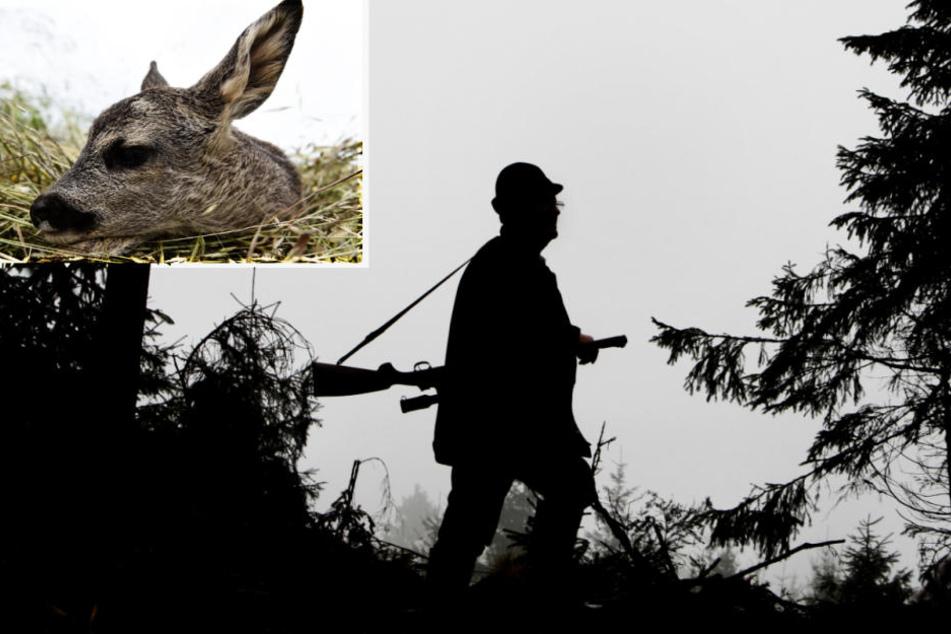 Jagdwilderei in Hessen: Wurde Bambi von Hunden tot gebissen?