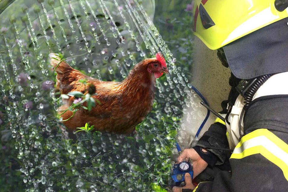 Ein duschendes Huhn hat dafür gesorgt, dass die Feuerwehr anrücken musste (Bildmontage).