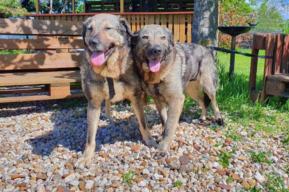 Seit sie auf die Welt kamen, sollen die beiden unzertrennlich sein: Lolek und Bolek suchen ein neues Zuhause.