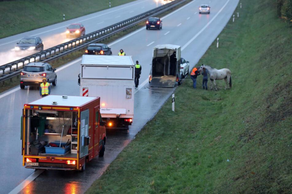 Das verängstigte Pferd am Zubringer zur A20 in Rostock konnte eingefangen werden.