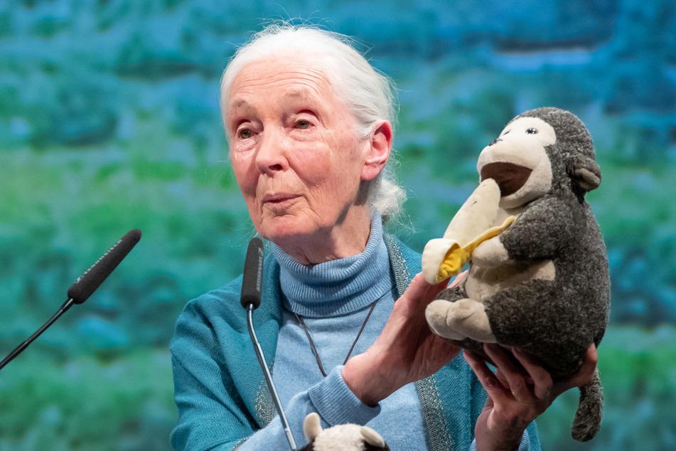 Primatenforscherin Jane Goodall (86) gehört zu den Preisträgern in Chemnitz.