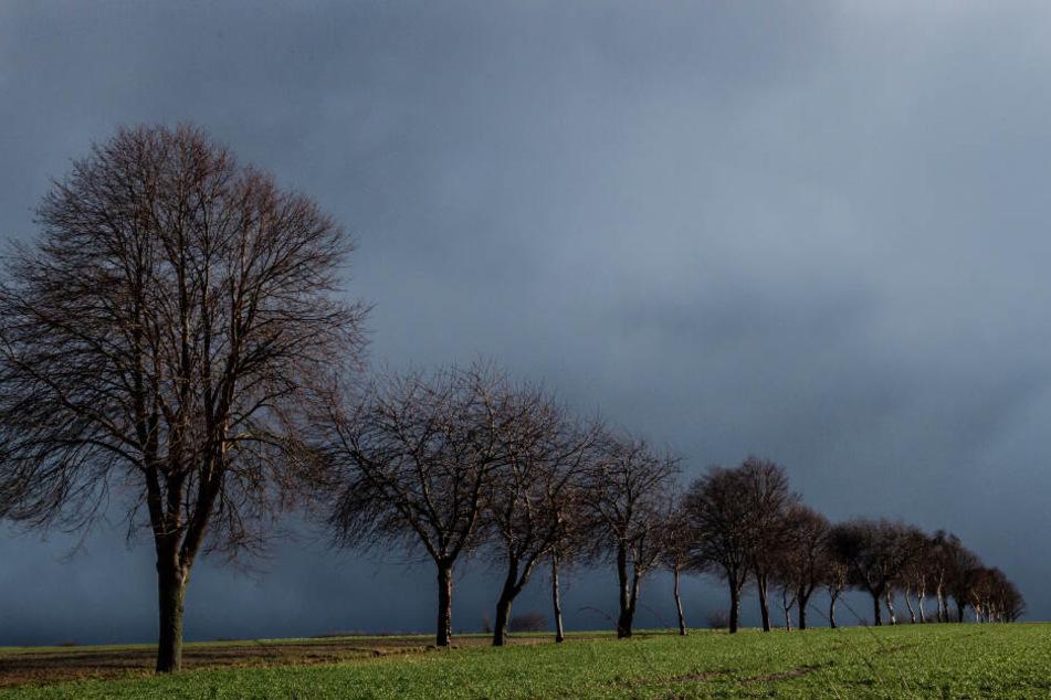 """Das braut sich etwas zusammen: Regenwolken ziehen über ein Feld mit Bäumen bei Seeburg im Landkreis Göttingen. Auswirkungen vom Sturmtief """"Sabine"""" sind in Südniedersachsen noch zu spüren"""