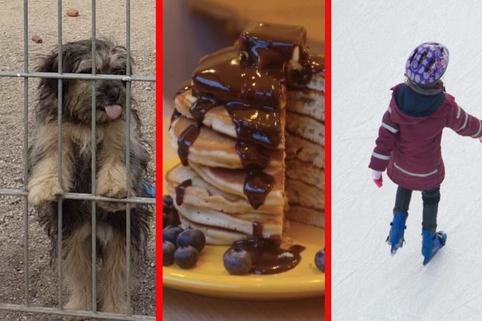Pancakes, Hunde, Eislaufen: Eure Samstagstipps für Leipzig