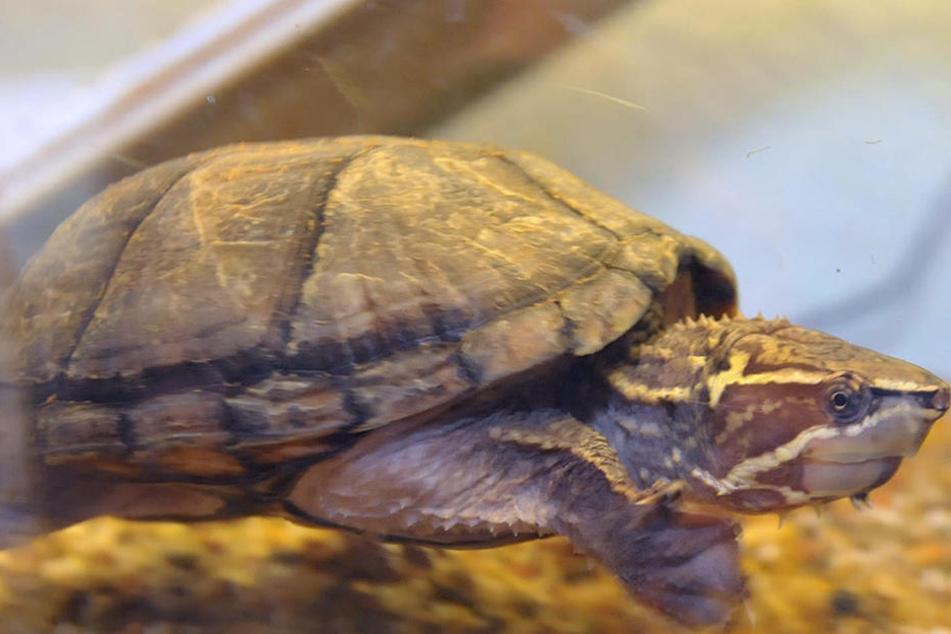 Hickhack um Fundtiere geht weiter: Zwickau hebt Vertrag mit Tierheim Röhrsdorf wieder auf