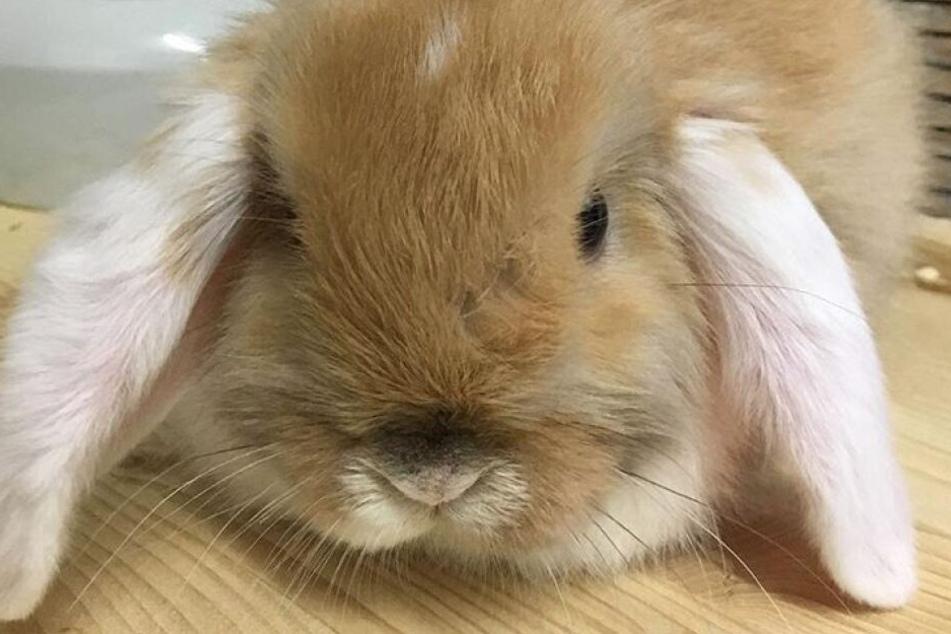 Der kleine Hase Olaf wurde nach dem Ebay-Kauf schnell wieder weggebracht.