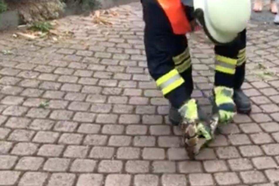 Ein Kamerad der Feuerwehr Rösrath packte die Schlange geschickt an.