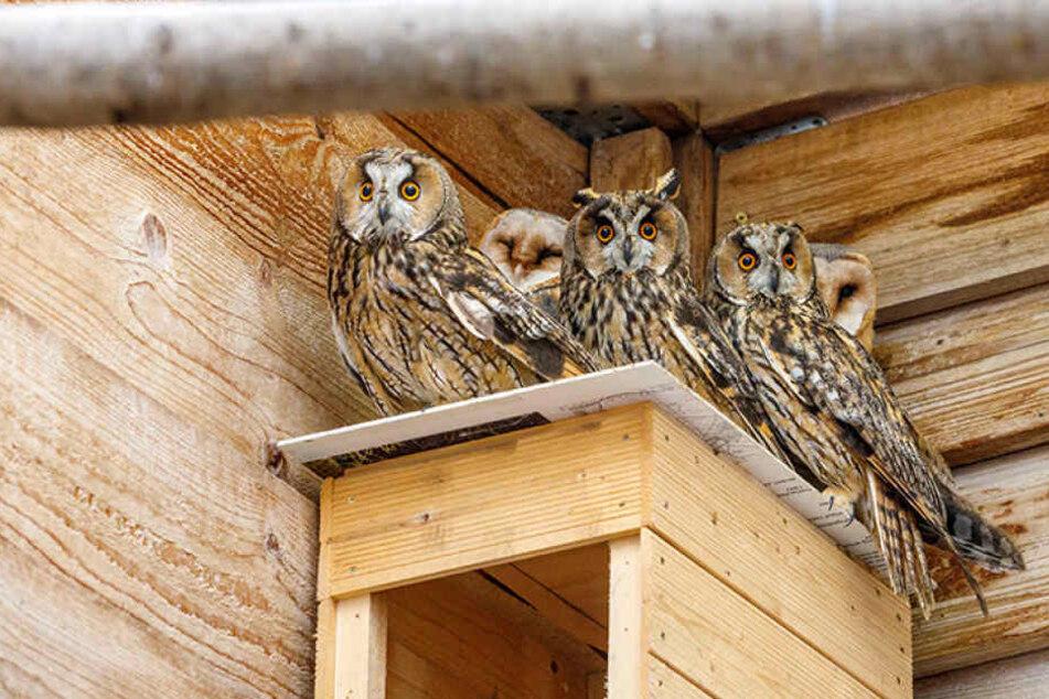 Eulen bitte eng zusammenrücken! Längst wollen sie in die Freiheit flattern.  Doch wegen der Vogelgrippe dürfen sie  die Rettungsstation nicht verlassen.