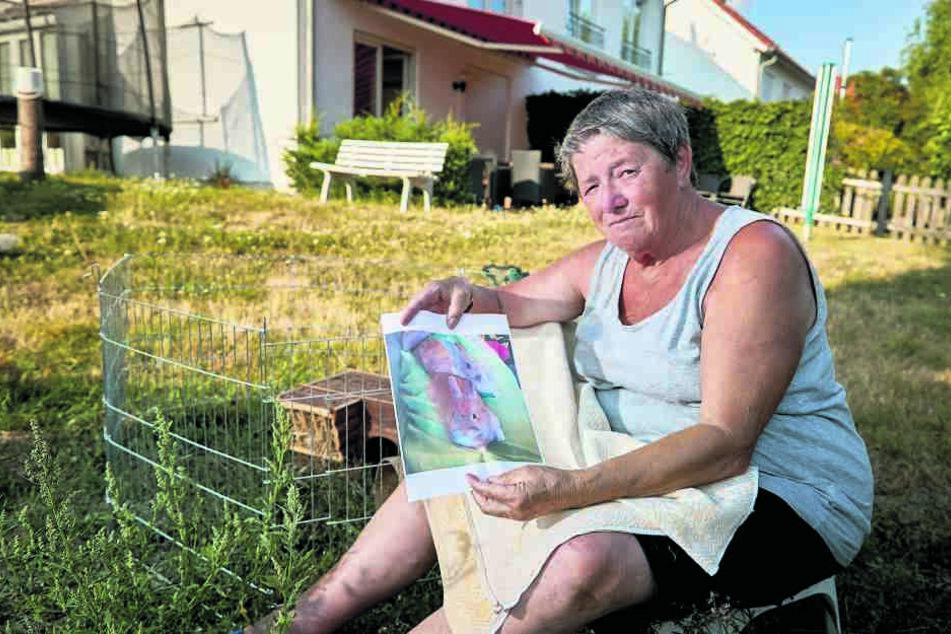 """""""Erbse"""" und """"Möhre"""" spurlos verschwunden: Wer hat Omas Kaninchen geklaut?"""