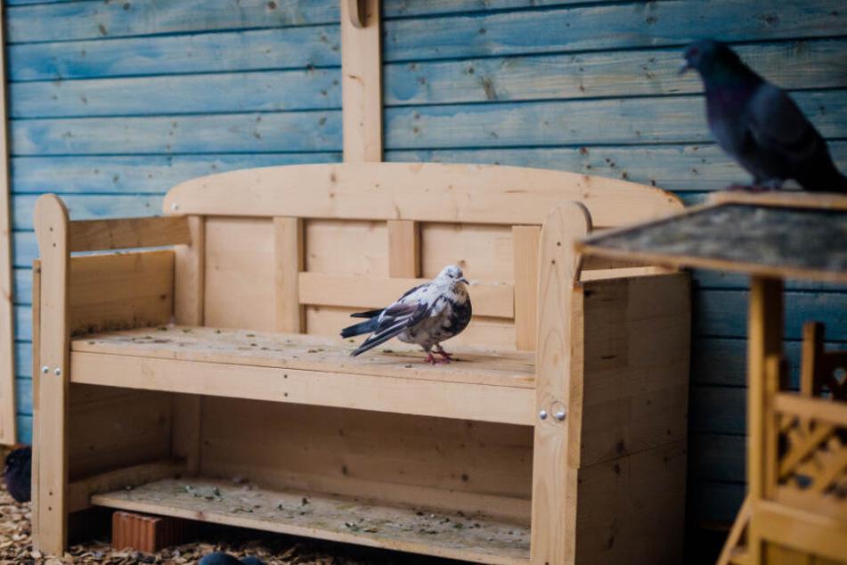 Das Hospiz für Tauben im Tierheim in Böblingen: Eine Taube auf einer Bank.