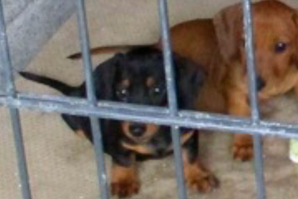 Passanten hören Hunde-Gejaule aus Garage, was die Polizei dann findet, ist unfassbar