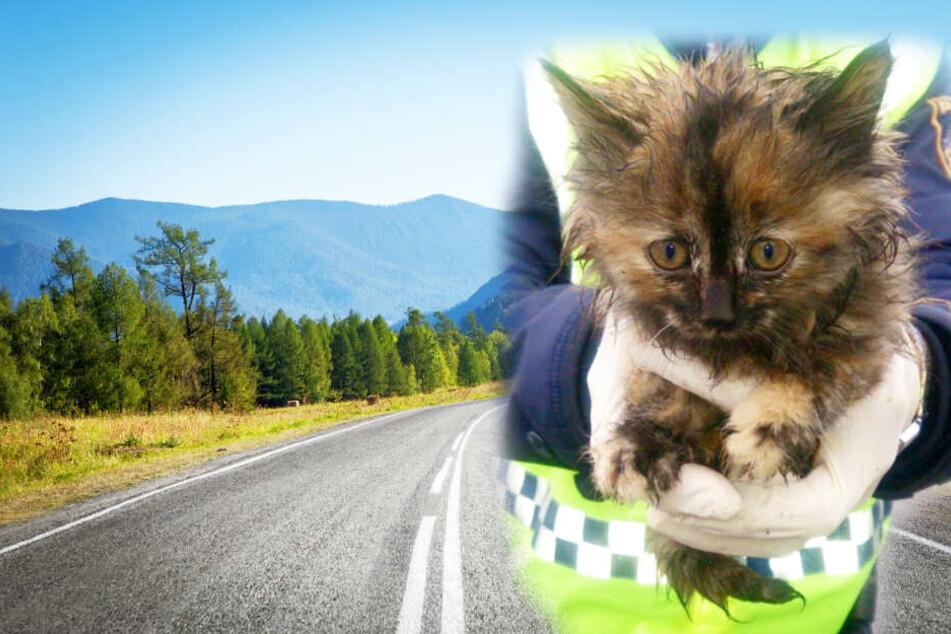 Polizisten retten Babykatze aus Straßengraben vor dem Tod