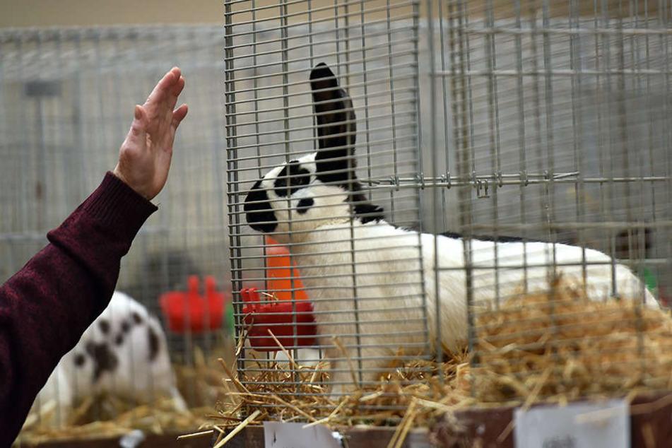 Die schönsten Kaninchen Deutschlands werden an diesem Wochenende in Leipzig gekürt.