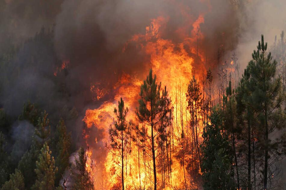 Experten rechnen damit, dass sich die Situation in den nordsächsischen Wäldern am Dienstag zuspitzt. (Symbolbild)