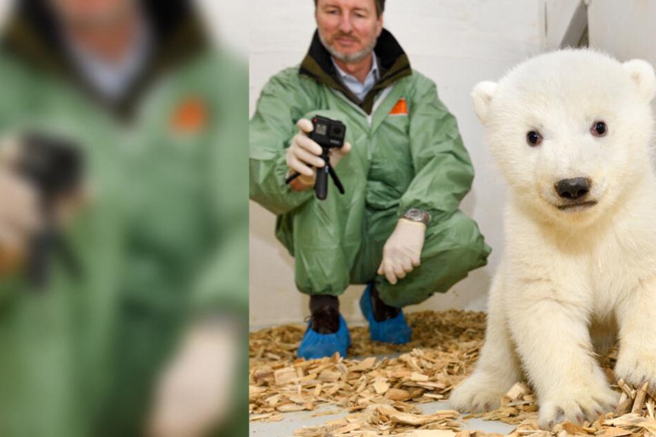 Endlich wissen wir, welches Geschlecht das süße Eisbären-Baby hat