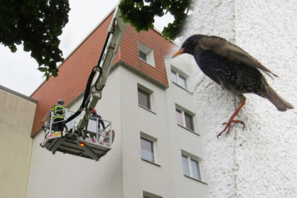 Vögel in Leipzig lebendig eingemauert: NABU zeigt Wohnungs-Genossenschaft an