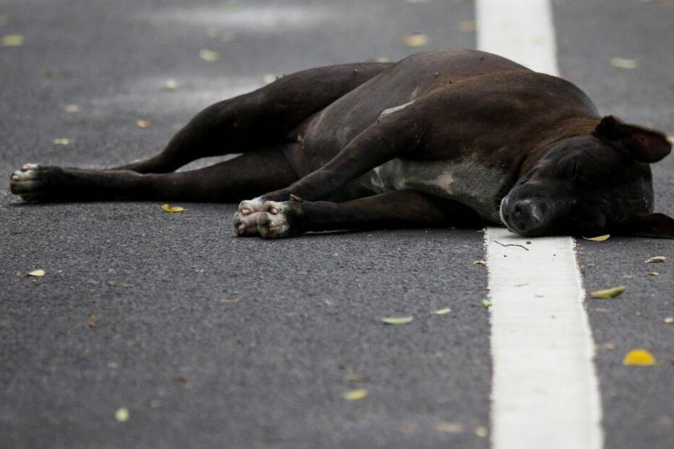 Den Hund ließ der VW-Fahrer sterbend auf der Straße zurück. (Symbolbild)