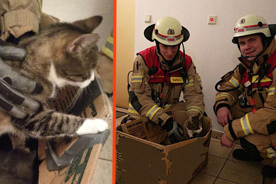 Zwei Feuerwehrmänner mit den geretteten Kätzchen.