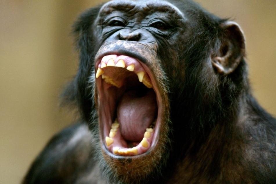 Der Affe hatte gut lachen - die Frau weniger. (Symbolbild)