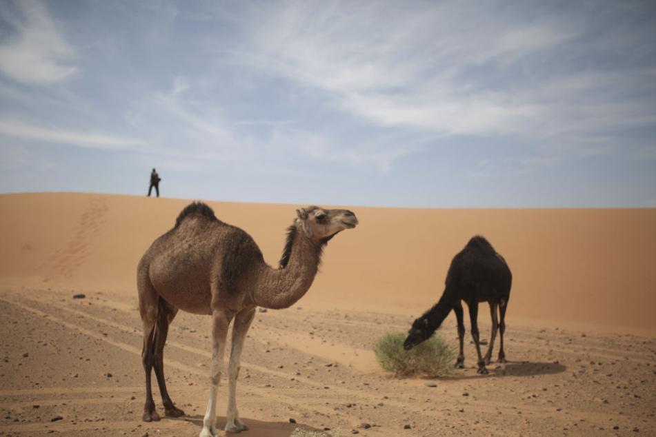 Heiße Wüstenluft aus der Sahara bringt in den Urlaubsländern Spanien, Südfrankreich, Italien und Kroatien bis hin nach Griechenland und in die Türkei Höchstwerte.