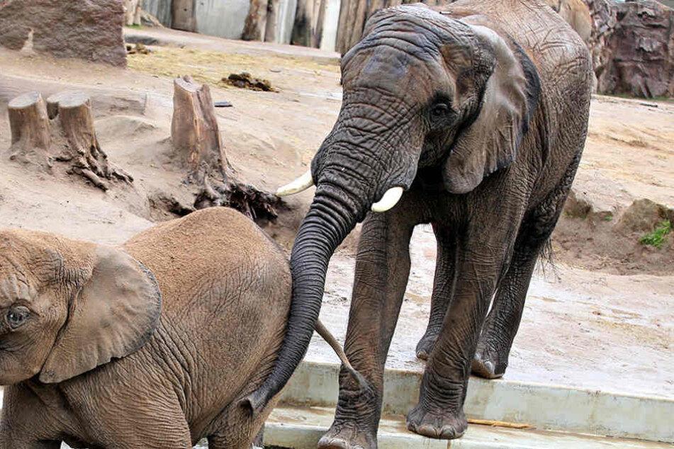 Sechs Monate Sex-Urlaub im Dresdner Zoo