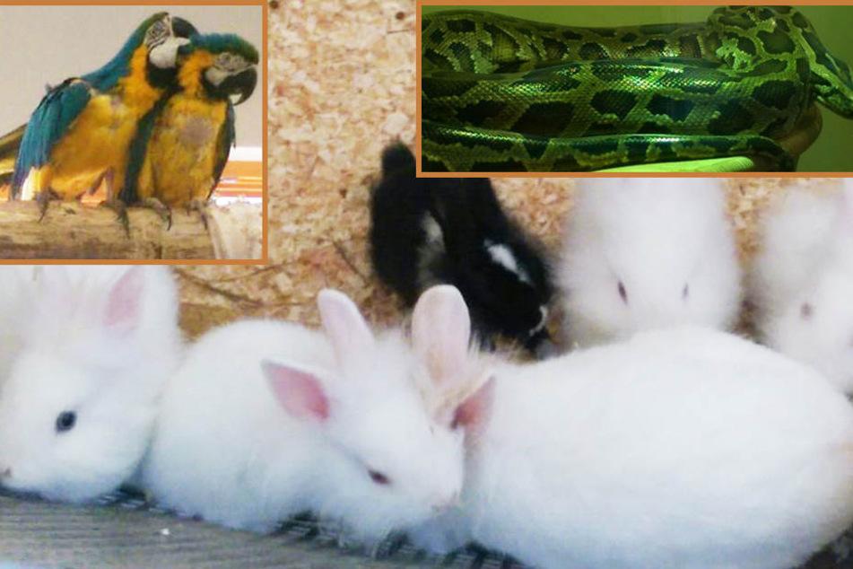 Von Katzen-Babys bis Papageien-Paar: Diese Tiere warten auf ein Zuhause