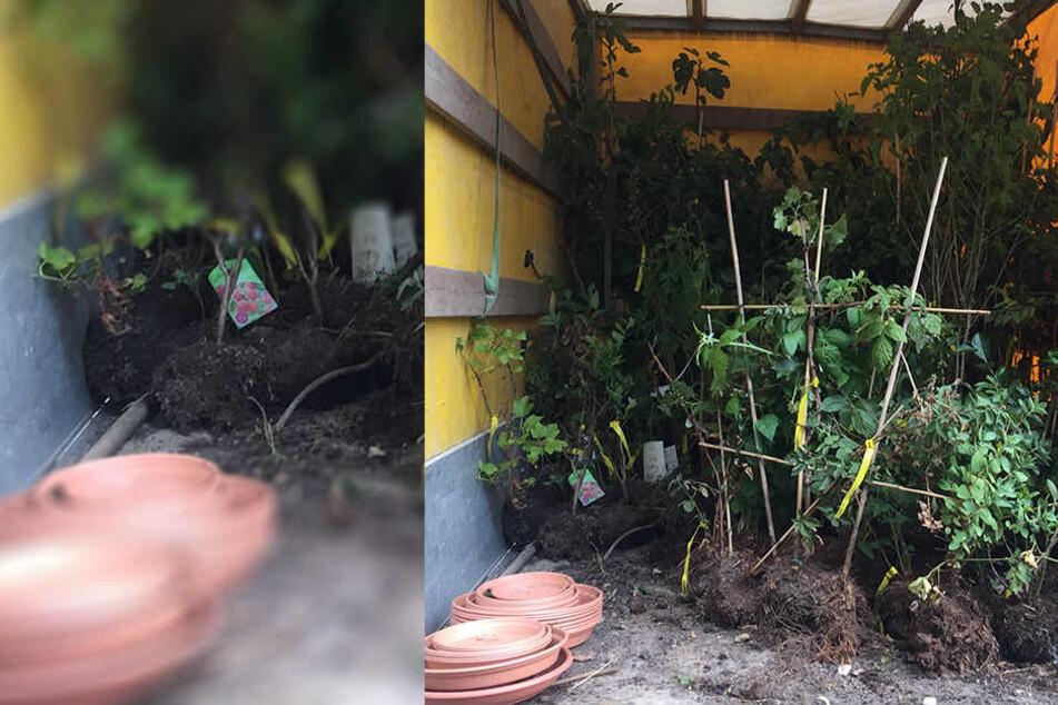 Pflanzen im Wert von 2.400 Euro sichergestellt