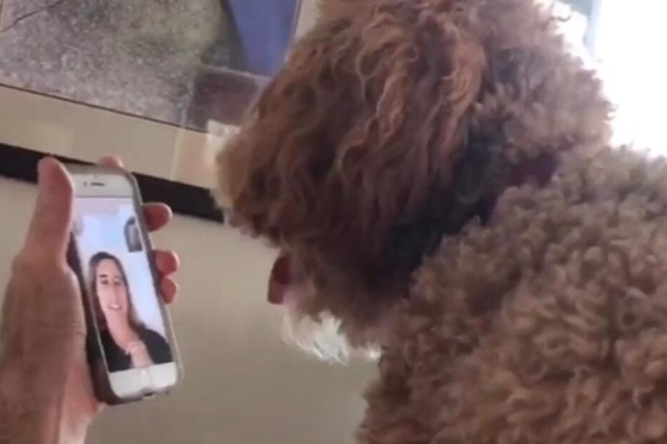 Moxie sieht sein Frauchen über Facetime.