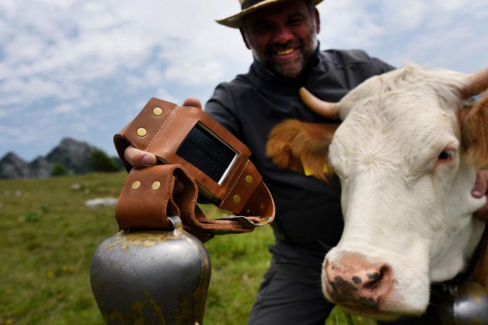 Für Kühe in Oberbayern und Tirol gibt es in diesem Sommer ein Technik-Upgrade.