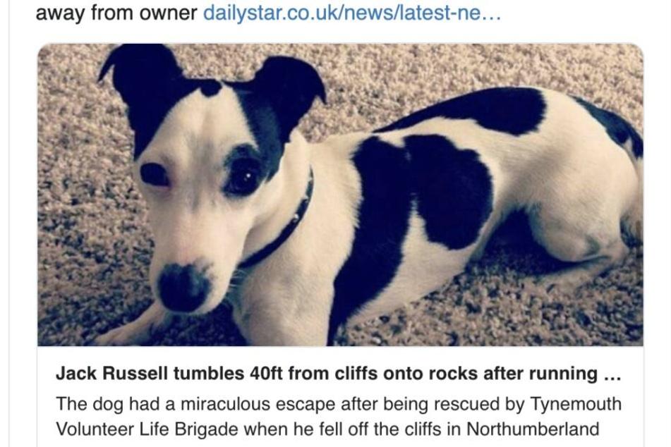 Hund Russell hatte viel Glück.
