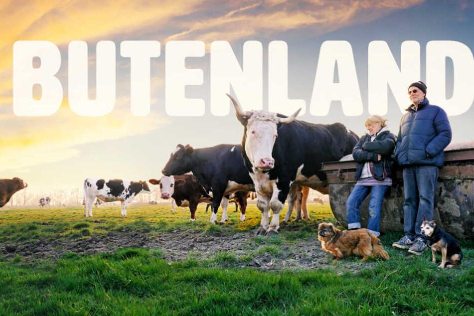 """""""Butenland"""": Einst ein """"erbärmliches Leben"""" für Tiere, heute ein Gnadenhof"""